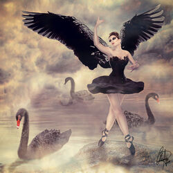 Odile the Black Swan
