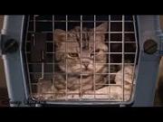 Laughycat