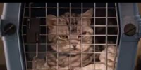 Laughy Cat (Kirby Buckets)