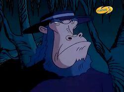 Ape Judge