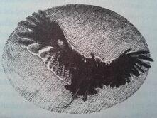 Eostra's eagle owl 3