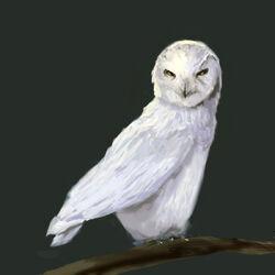 Owl Von Rothbart