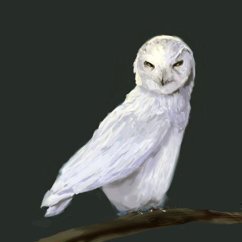 File:Owl Von Rothbart.jpg