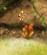 File:Berry glitch.png