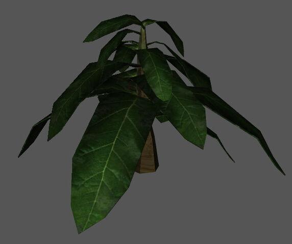 File:Plant.jpg