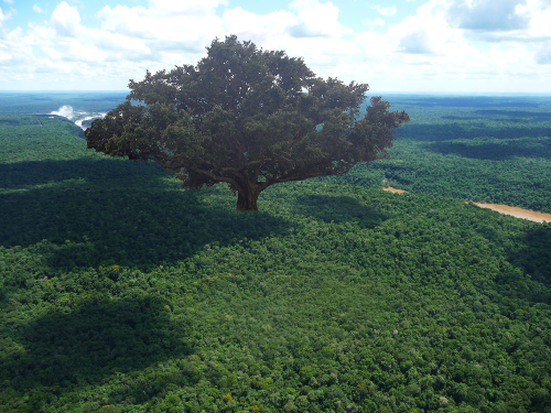 File:Great Mother Tree small.png