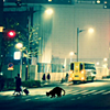 File:Stray Cats On The Night icon.png