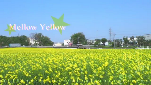 File:Mellow Yellow.png