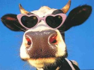 Plik:Cow.jpg
