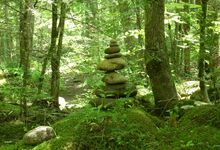 Balance in Nature 2