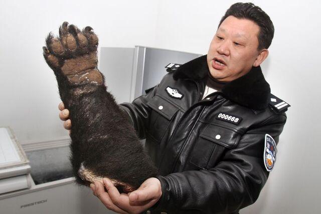 File:Severed-bear-paw-seized-china-chongqing-airport-01.jpg