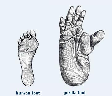 File:Feet.png