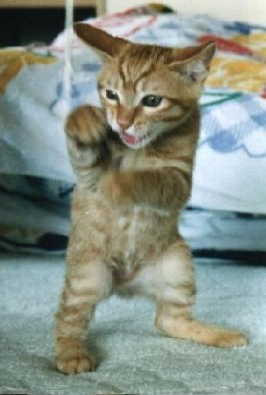 File:Bruce Lee Catzxcvb.png