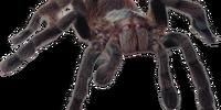 Composite Spider