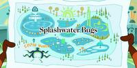 Splashwater Bugs