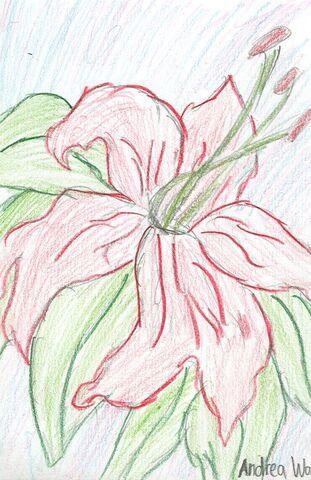 File:Andrea Wang The Lily.jpg