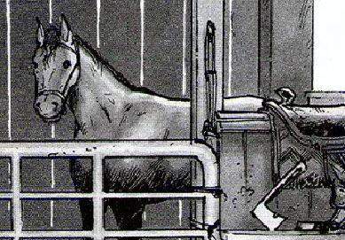 File:Horse soapdj.JPG