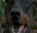 Duke (TV Series)