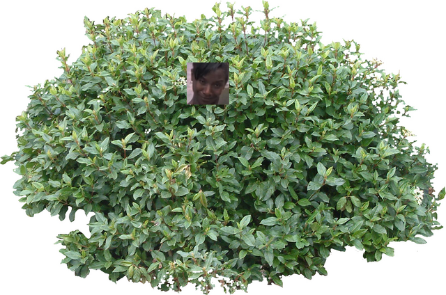 File:Bloxx's bush.png