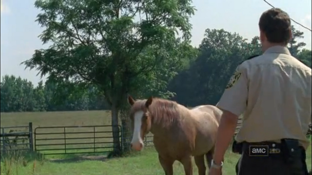 File:Horse and rick1.png
