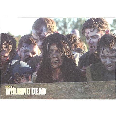 File:The Walking Dead - Sticker (Season 2) - S8.jpg
