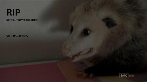 File:1Possum.jpg