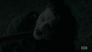 The wolf as a walker