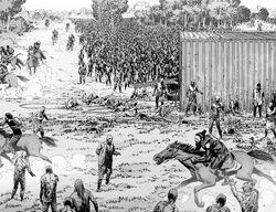 The Washington Herd