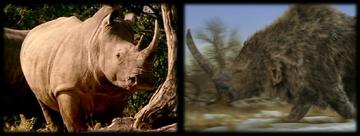 RhinocerosCollage
