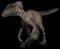 Raptornumber2.png