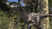 Dromaeosaurus-wwd-1
