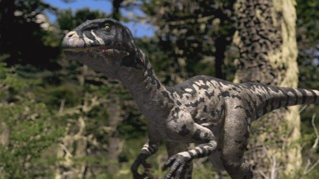 File:Dromaeosaurus-wwd-1.jpg