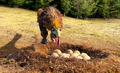 Troodon the egg theif.png