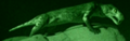 WWM Night Vision.png