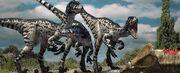 Dromaeosaurus eating