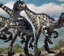 Little Torosaurus