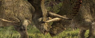 Torosaurus in fight