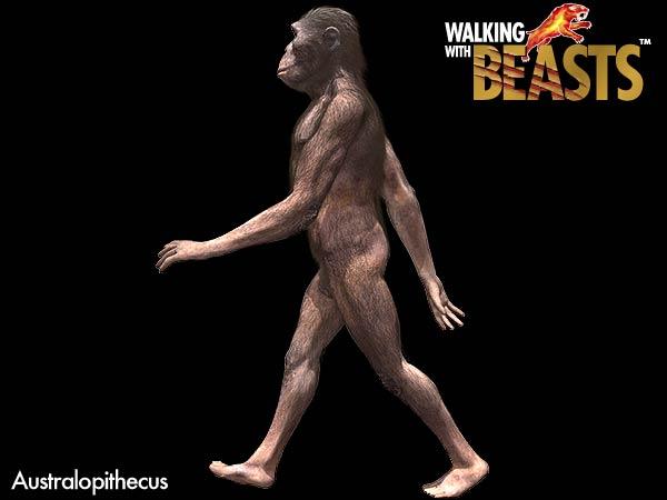 File:Australopithecus.jpg