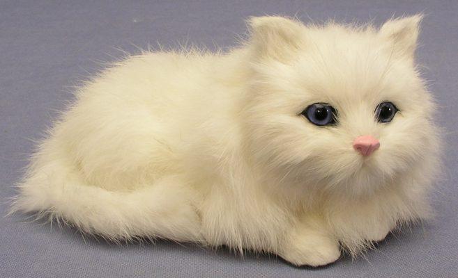 Furry-cat