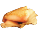 Easter Island Conch