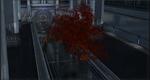 CBleaningmapletree