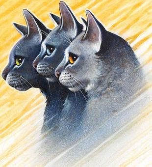 Warrior Cats Rosenschweif