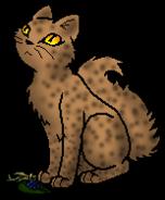 Warrior Cats Sandginster
