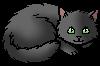 Stormwhisker.kitten