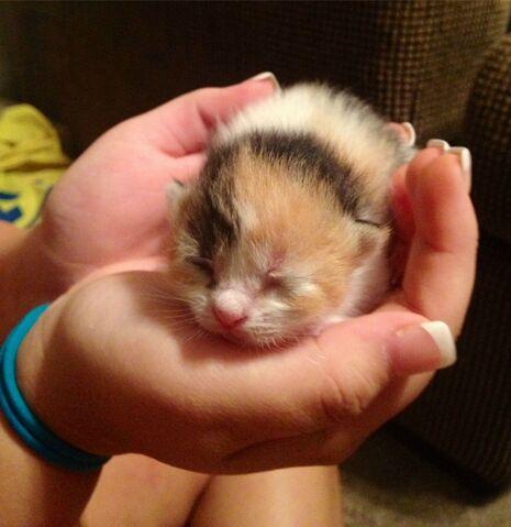 File:L-One-of-my-friends-kittens 1.jpg