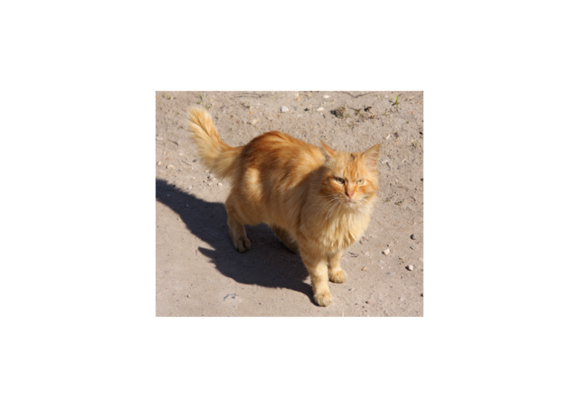File:Red Cat in Torzhok City resize.png