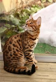 Leopardflower3