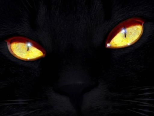 Black-Cat-With-Yellow-Eyes-512X384-2490-1-