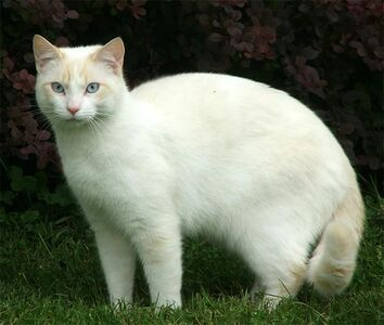 Cat-beautiful-white-1-