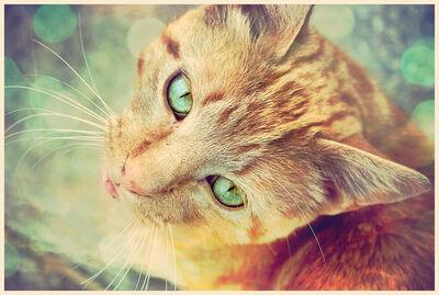 Miau by grihmphotography